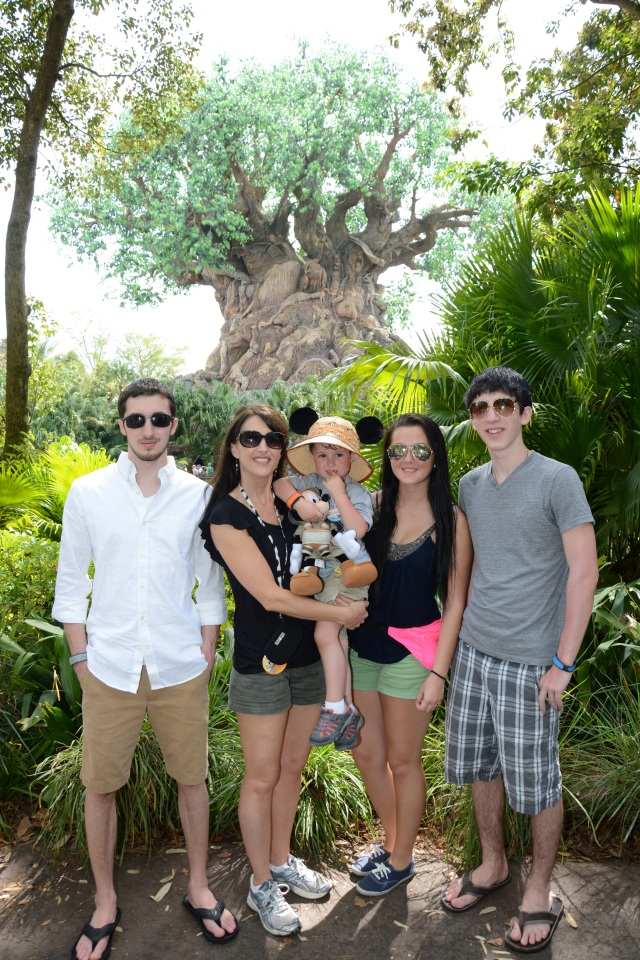 Tree of Life, Animal Kingdom